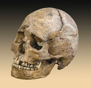 Skull from a tomb dating to the Mesolithic period