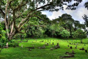 El Cementerio de Corozal, 2nd Place, WLM Panamá