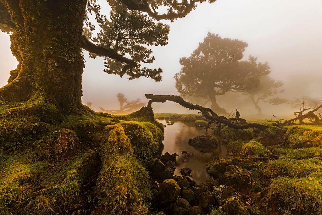 """O Fanal, Ilha da Madeira, Portugal"" by Jnvalves, under CC-BY-SA-3.0"