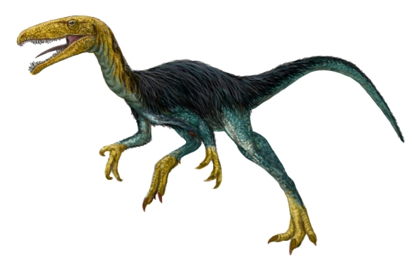 Velocisaurus. Restoration by FunkMonk, CC BY-SA 3.0.