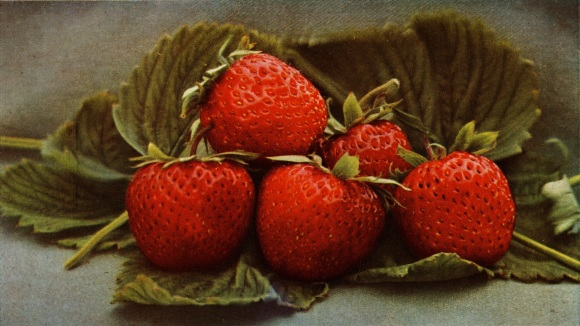 Image by the US Department of Agriculture, public domain/CC0.